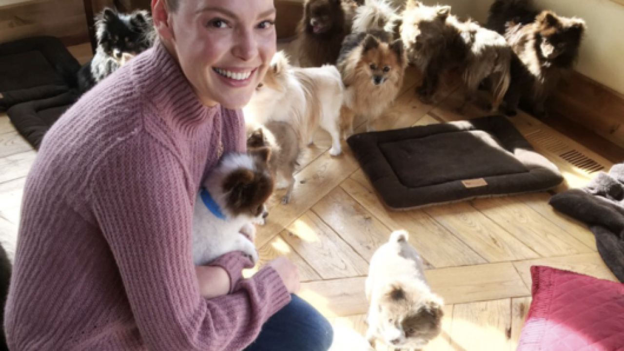 Actress Katherine Heigl helps 12 of rescued Pomeranians