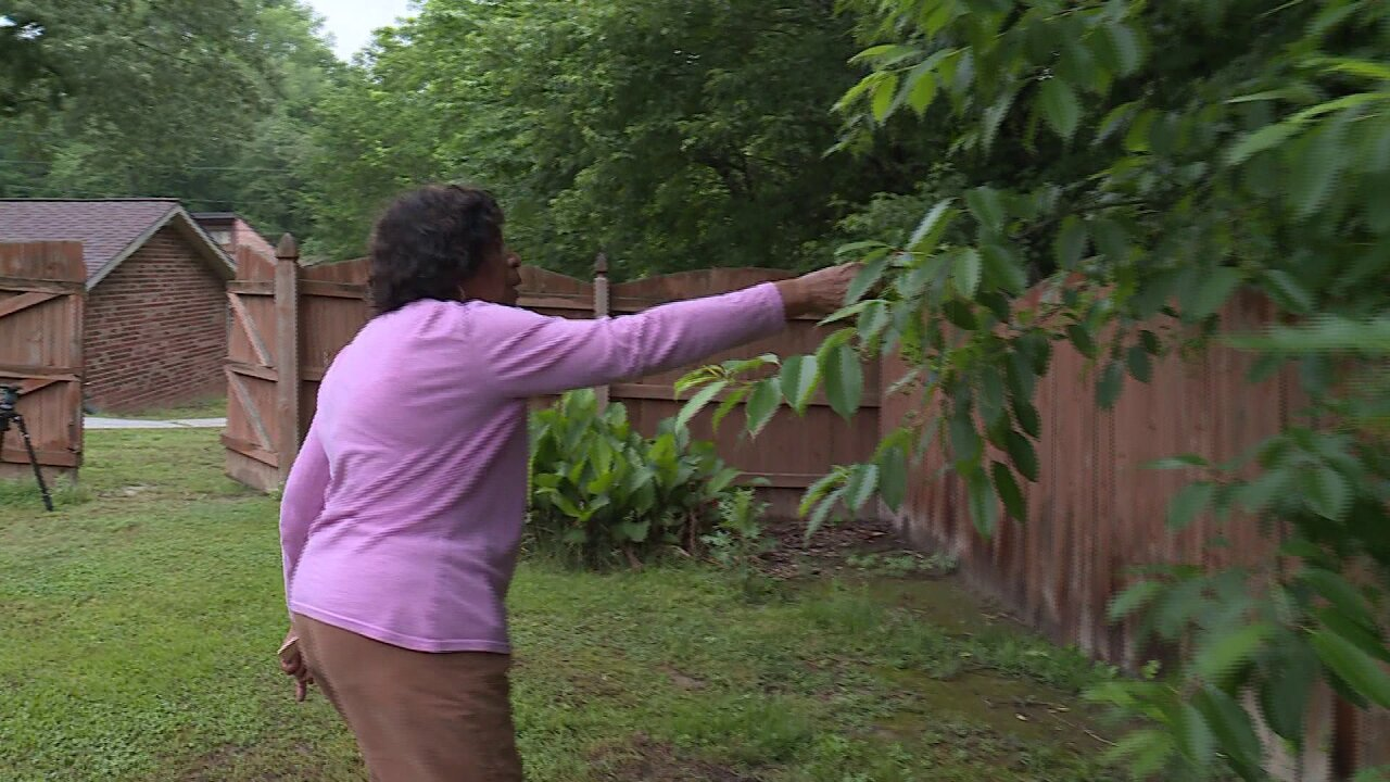 Homeowner upset about overgrown trees next door: 'It's ridiculous. Just toomuch'