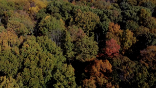Climate change impact on fall foliage emerging