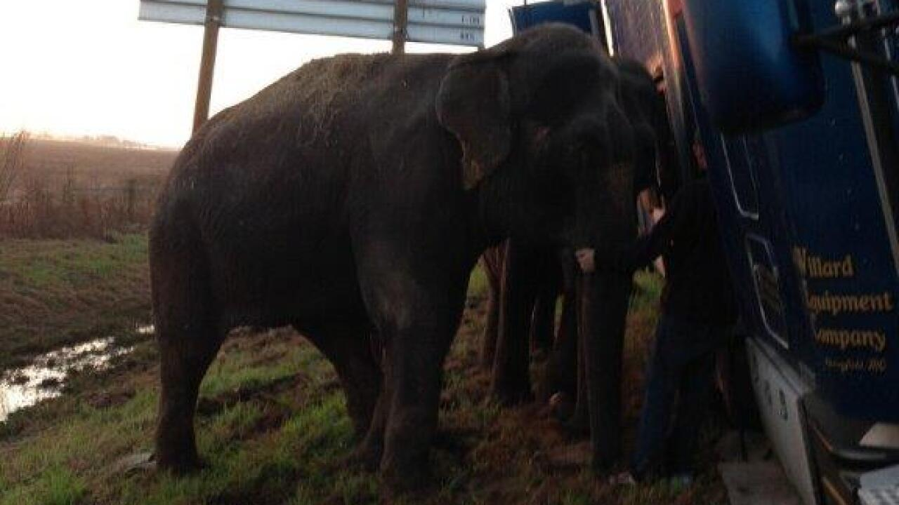 Sheriff's deputies shocked to find elephants holding up tipped 18-wheeler