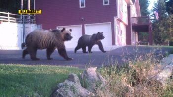 better-bears-350x197.jpg