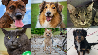 Adoptable-Pets-feb-8.png