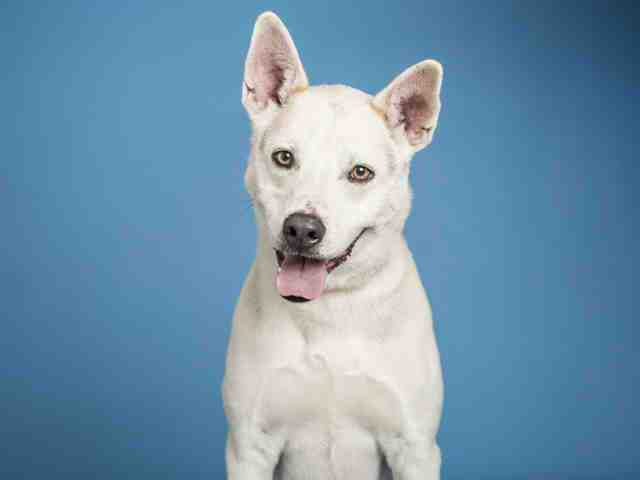 Adoptable pets from Arizona Humane Society and Maricopa County Animal Care (5/2)