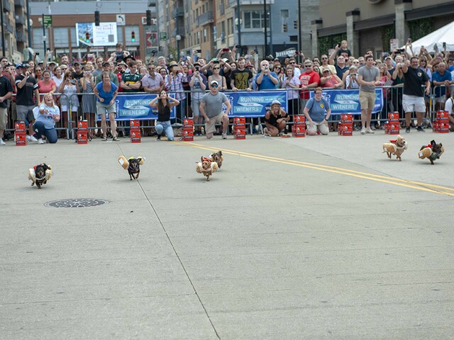 PHOTOS: Dashing Dachshunds kick off Oktoberfest Zinzinnati at the annual Running of the Wieners