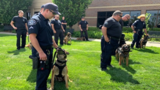 This Police Department Had A Retirement Party For A K9 Officer And All His Dog Coworkers Showed Up
