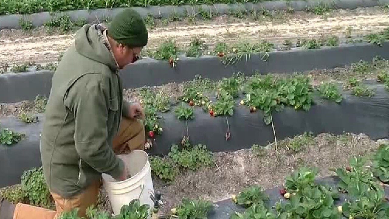 Local farms preparing for more cold weather