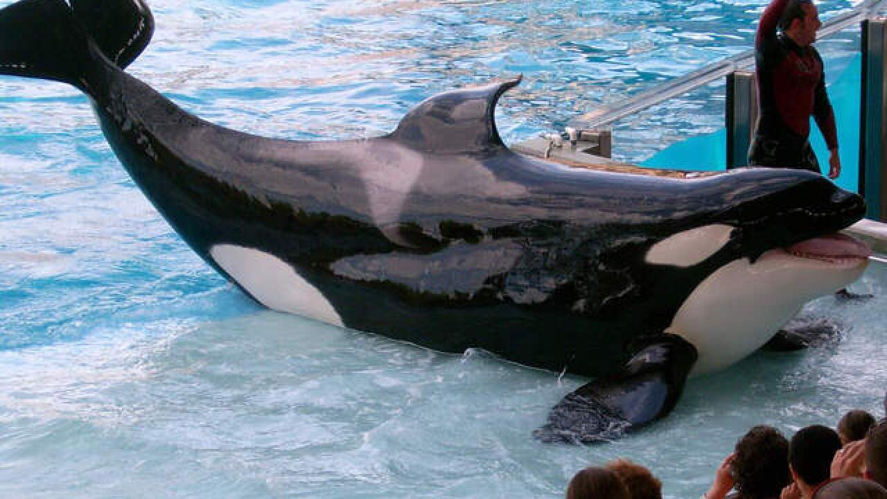 SeaWorld: Tilikum, orca that killed trainer in Orlando, has died