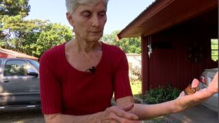 Acadiana woman saving and raising butterflies