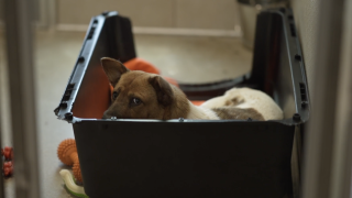 At the ASPCA's Behavioral Rehabilitation Center just outside Asheville, North Carolina, dogs that experience extreme cases of cruelty and neglect are brought there to get better.