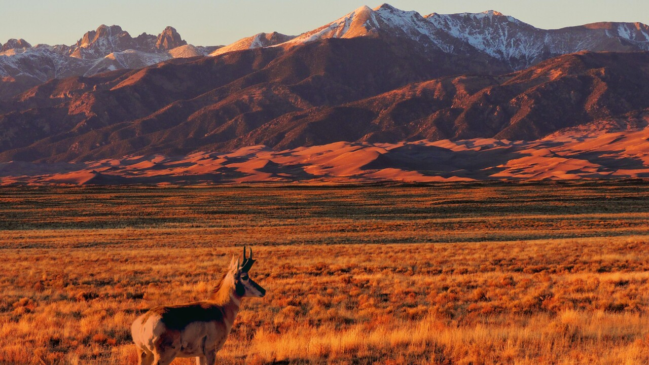 Wild Life at the Great Sand Dunes National Park and Preserve (6).jpg