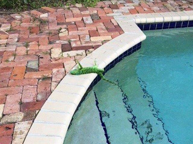 PHOTOS: Cold weather stuns South Florida iguanas