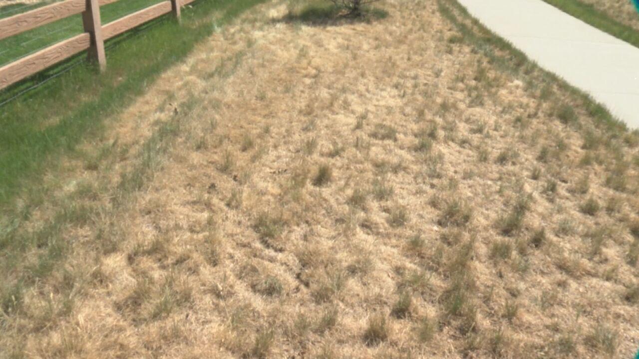 Grassy area behind Arrigo's backyard
