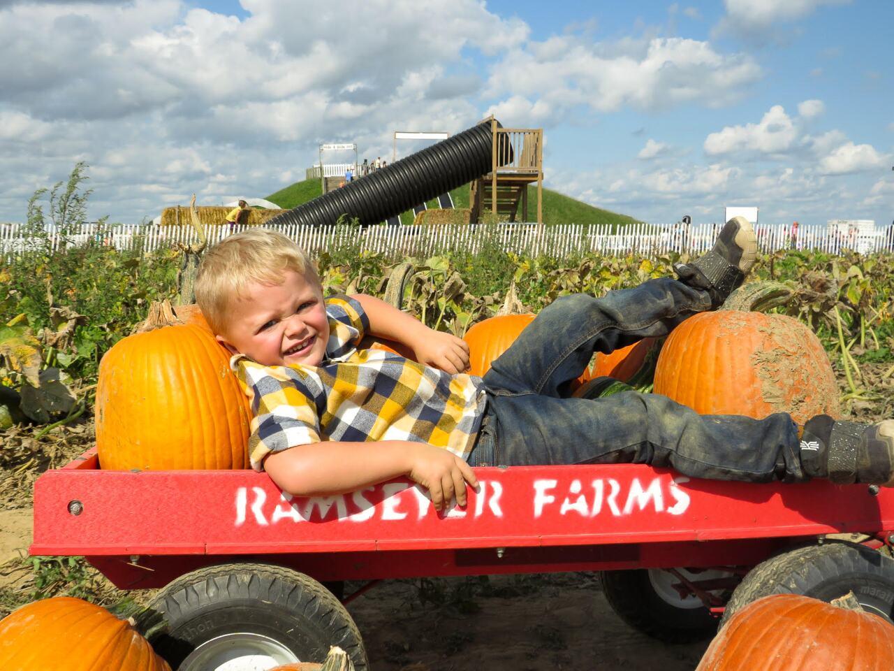 Pumpkins 4.jpg