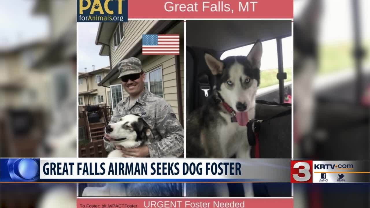 Deploying airman needs a foster home for his dog