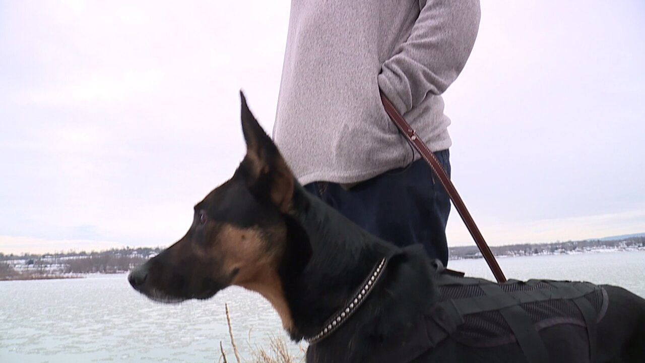 This service dog is trained to help his diabetic owner detect insulinlevels
