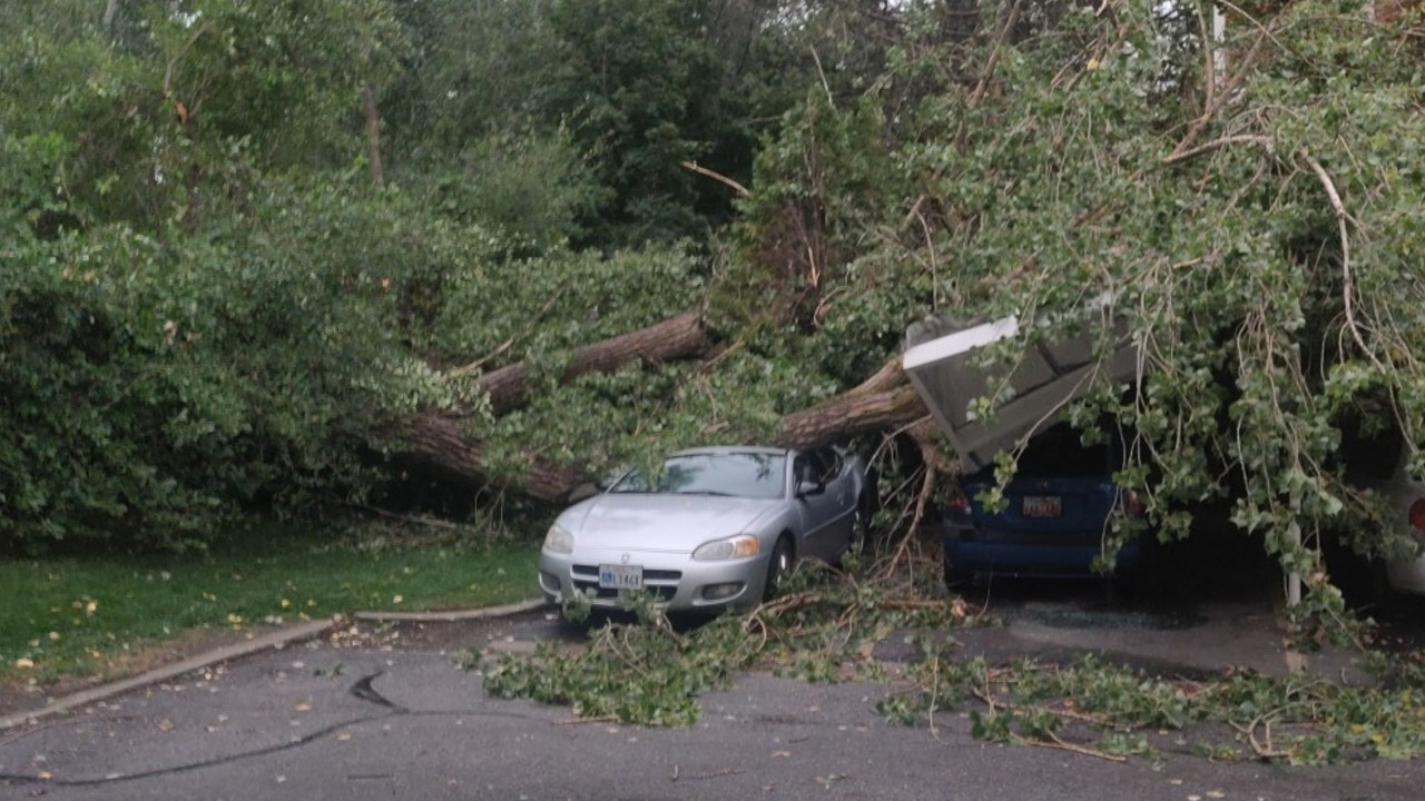 Millcreek Tree Down
