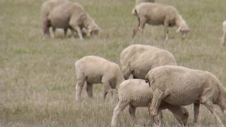 Drought aid resources available for Montana farmers
