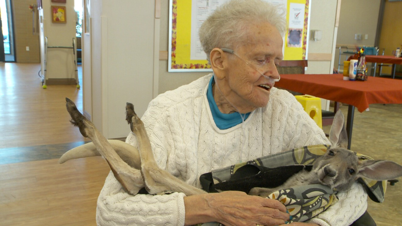 Charlie the kangaroo a source of comfort at home for veterans in Salt Lake City