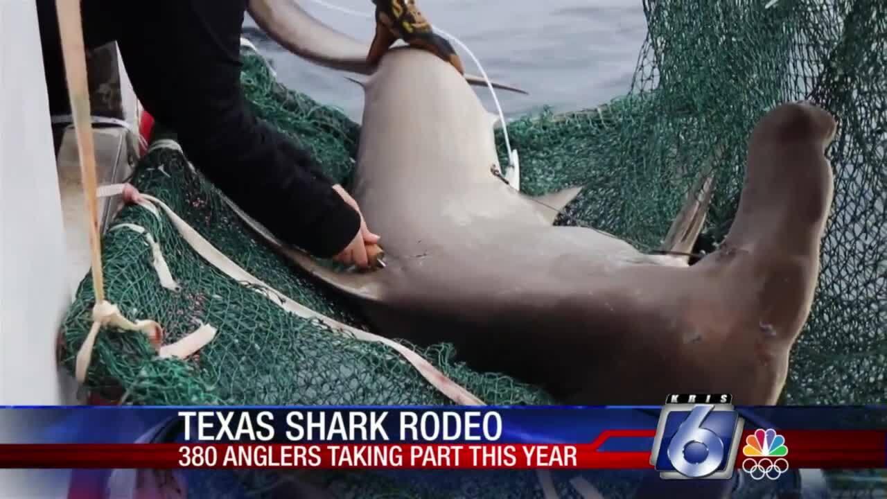 Texas Shark Rodeo continues along gulf coast