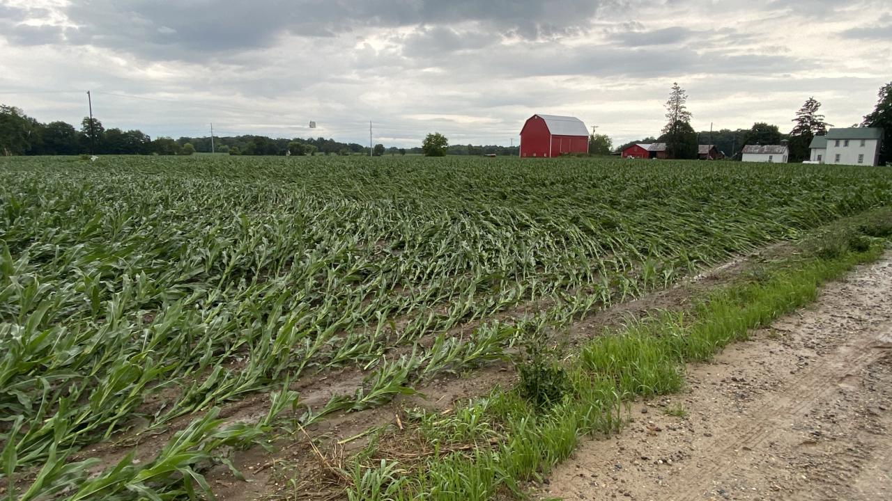 Freeport barn damaged field track