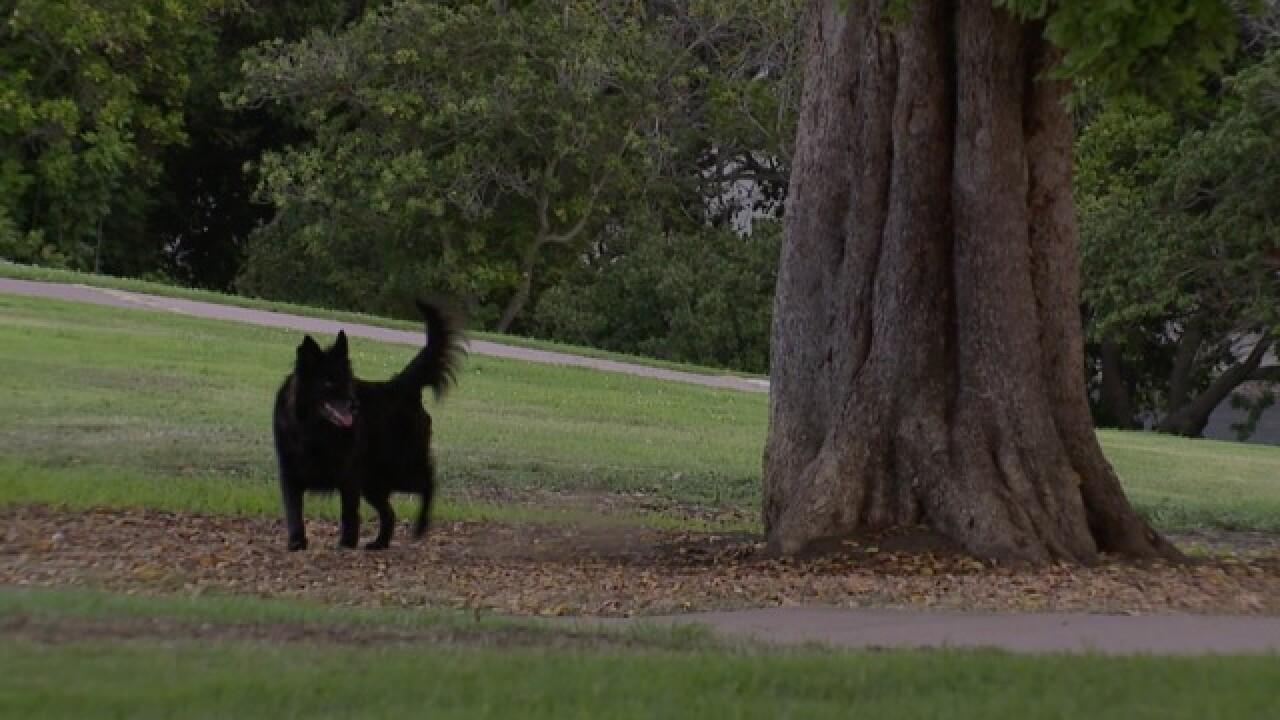 Parents urge: Leash dogs at Kate Sessions Park