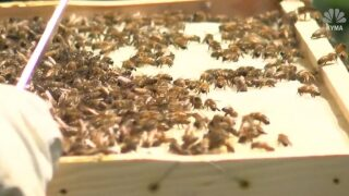 Honey season looking sweet in Pueblo County