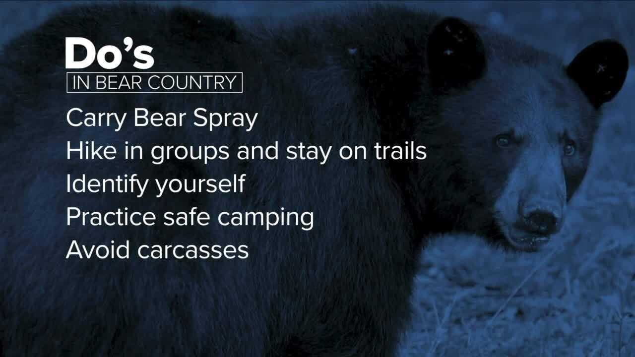 Bear Advice