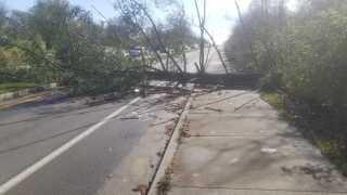 Hebron tree down.jpg