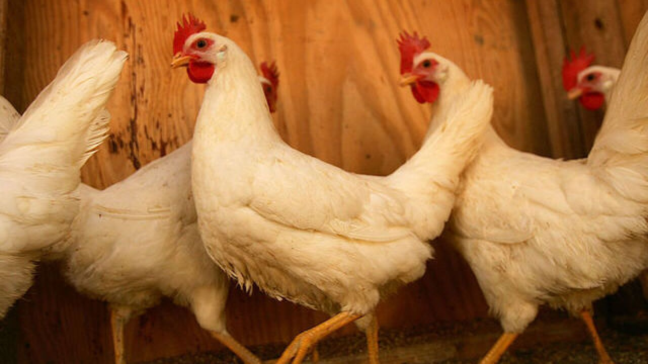 Oregon man arrested for sexual assault on chicken