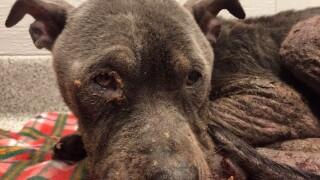 Capital Area Humane Society Cruelty Case