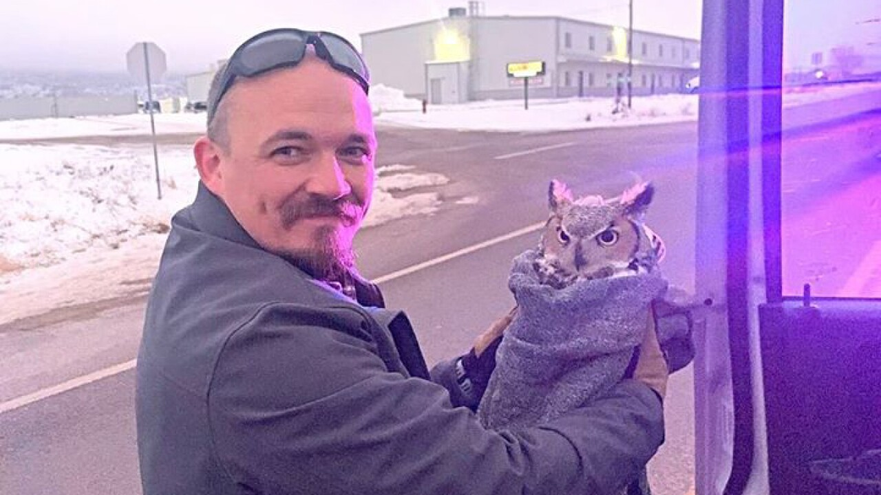 Grand Co. deputy rescues injured owl from highway