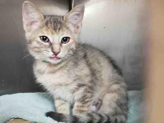 Adoptable pets from Arizona Humane Society and Maricopa County Animal Care (10/11)