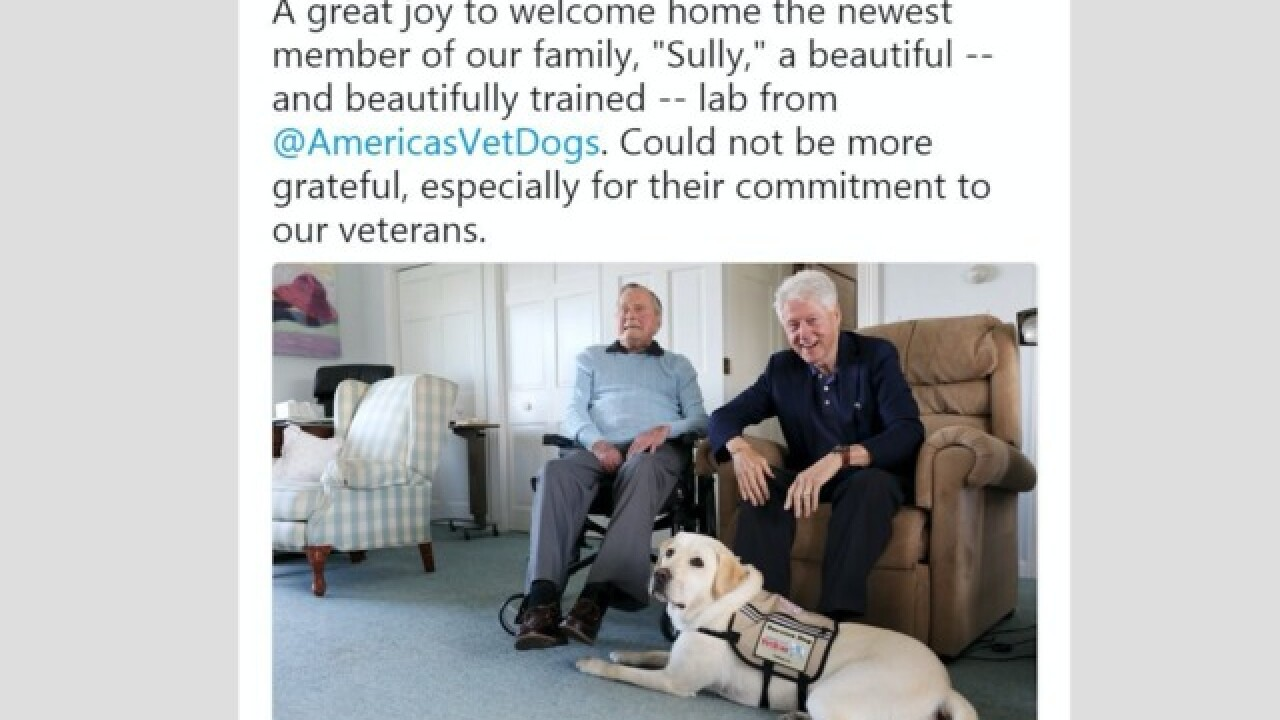 George HW Bush enlists help of new service dog Sully