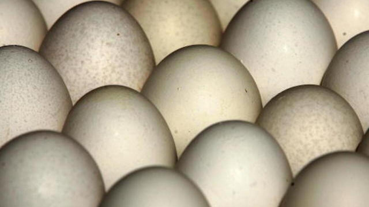 Millions of eggs in nine states recalled over salmonella fears