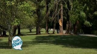 Expert Advice to Recognize a Sick or Dead Tree