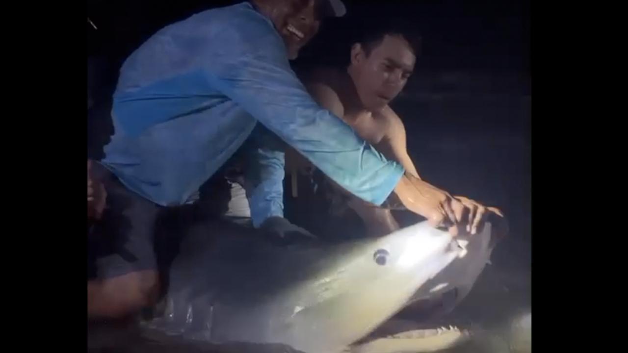 Anglers reel in estimated 13-foot tiger shark near Bob Hall Pier