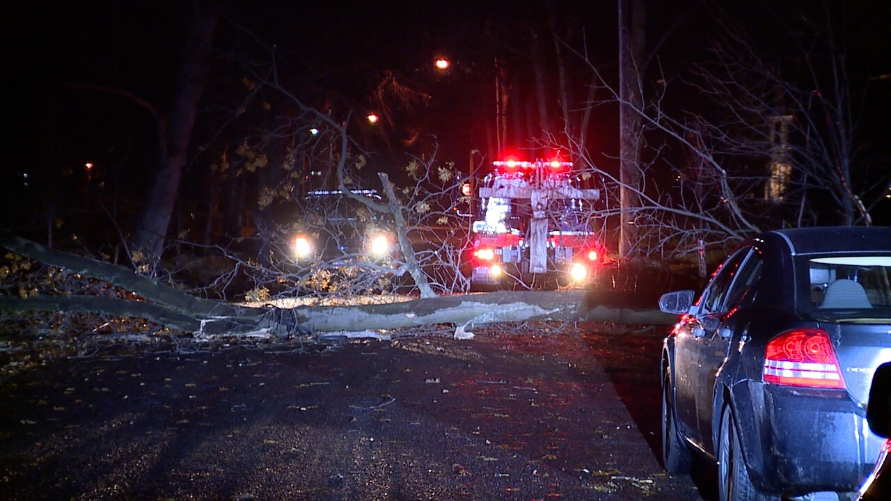 Cleveland Hts tow trees 4.jpg