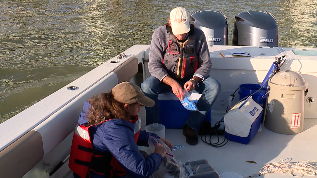 Algae that survives harsh conditions: why the Sandusky Bay bloom lasts so long