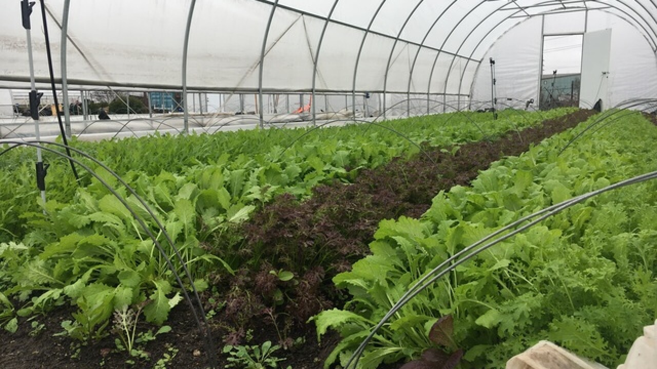 New Kimbal Musk restaurant to use Indy farmers