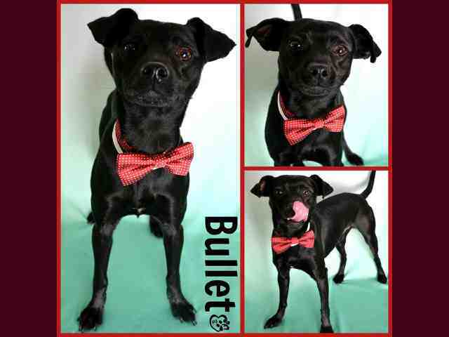 Adoptable pets from Maricopa County Animal Care and Control (4/20)