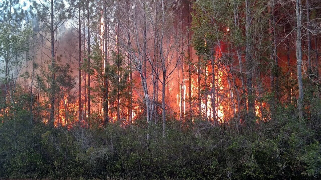 Florida fire started by book burning destroys at least 10 homes