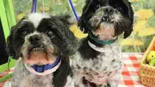 See some of the pets available to adopt for free this weekend