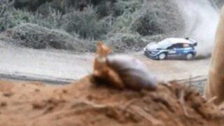 snail race.JPG