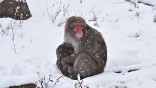 Macaque 10-2019-3733.JPG