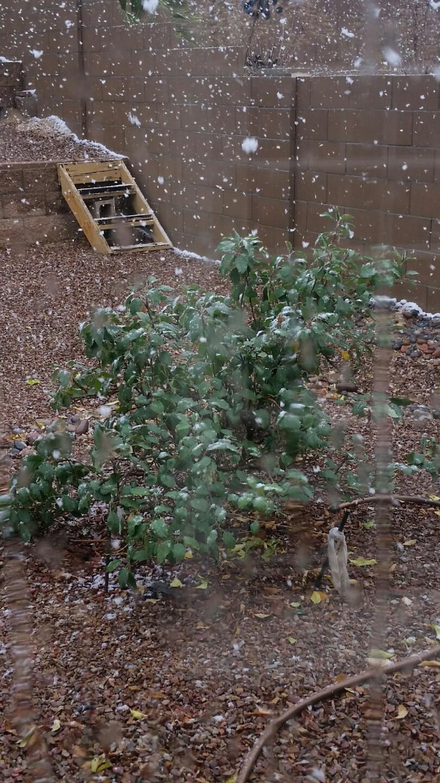 Snow on apple tree