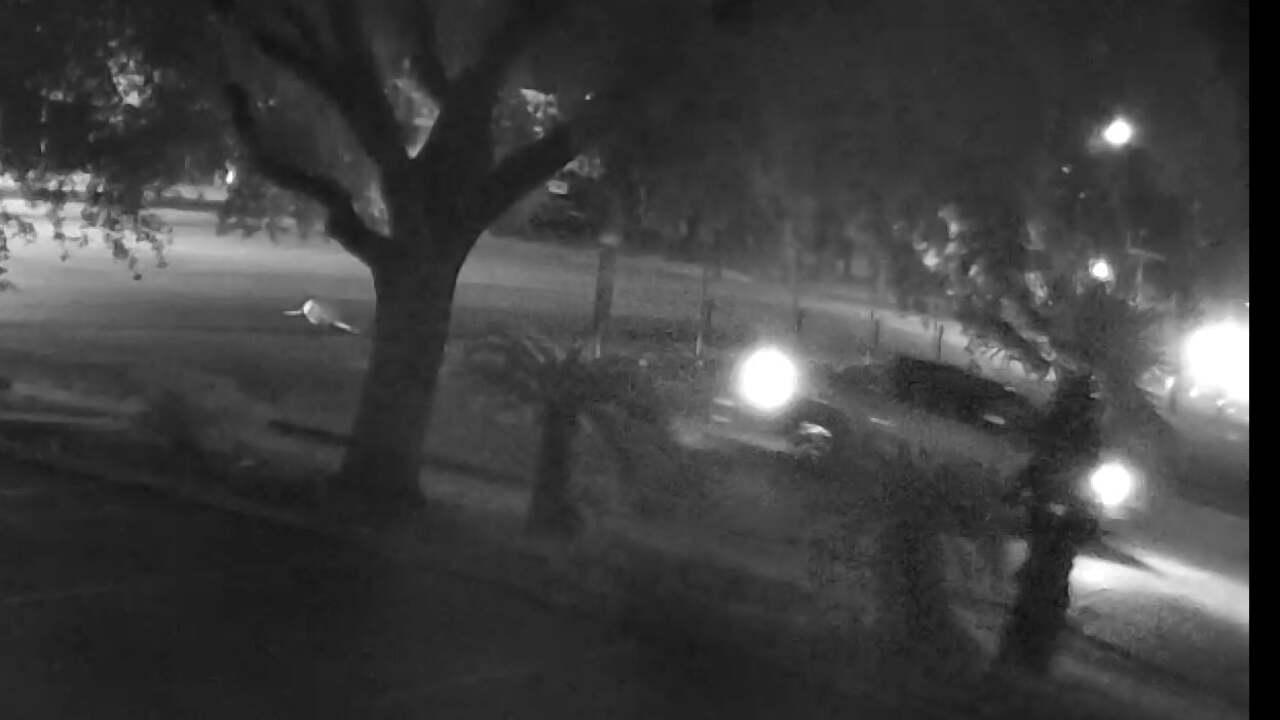 kingsville auto-pedestrian crash