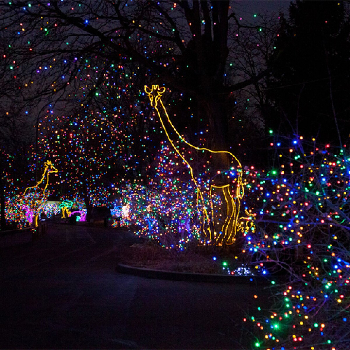 Denver Zoo's 'Zoo Lights' To Sparkle With Holiday Fun This