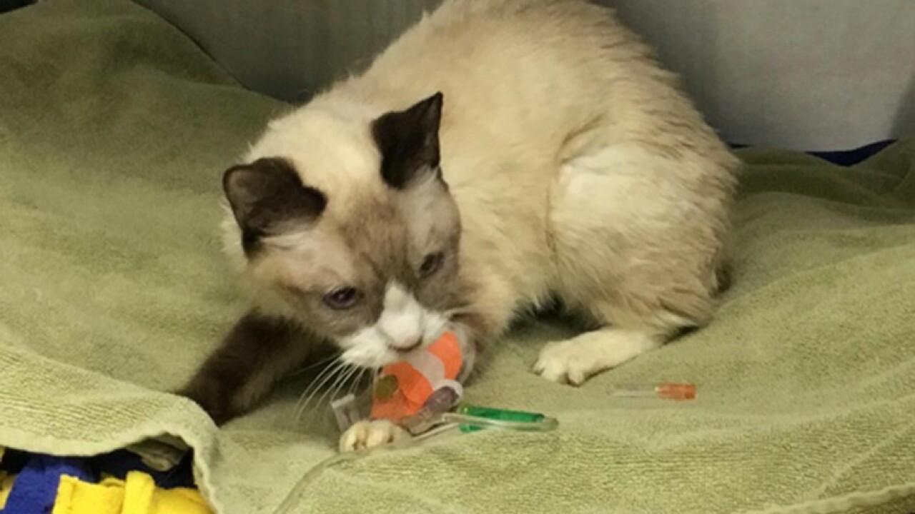 humane_society_cat_rescue3.jpg