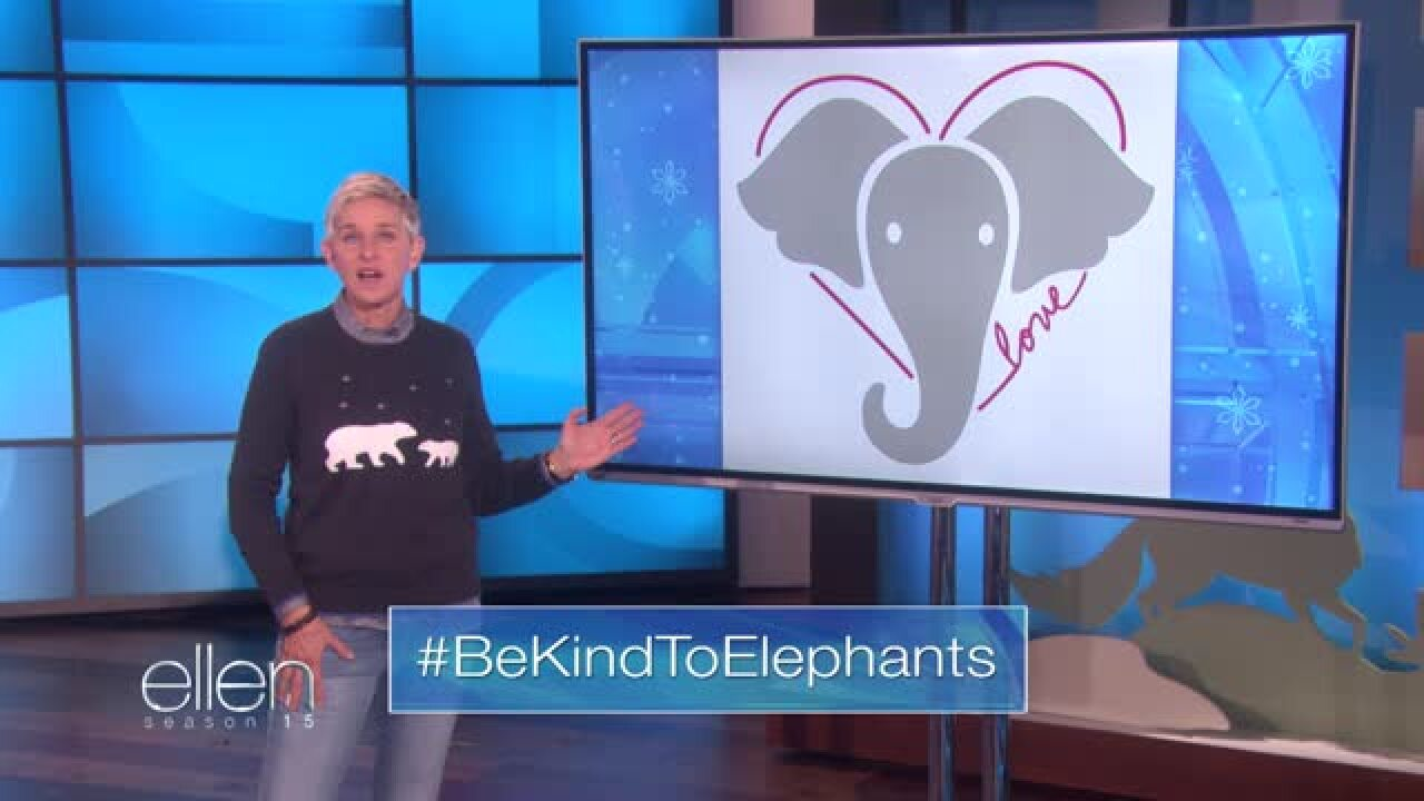 Ellen 'determined to do something' after US🐘elephant trophies banreversal