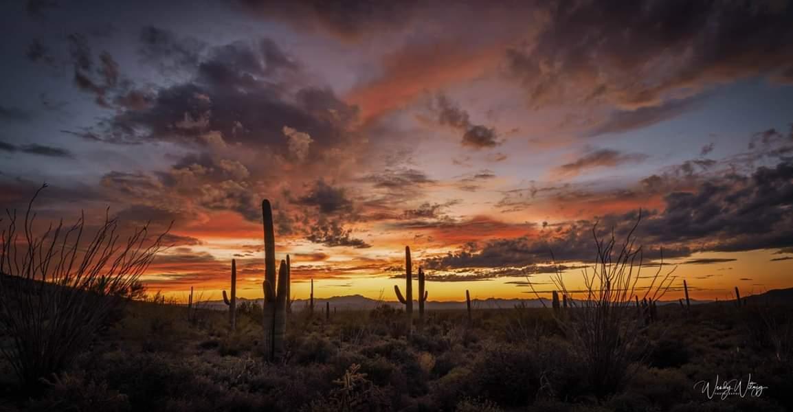 Wendy Witzig JAN 10 Sunset Saguaro National Park.jpg